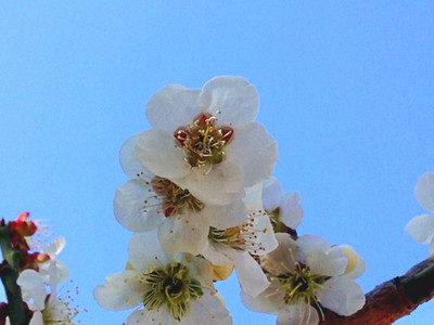 Naver_photoalbum_sekiishi_82339164
