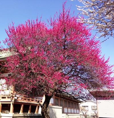 Naver_photoalbum_sekiishi_82339177